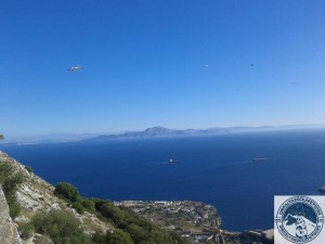 Gibraltar-Rock-Ape-Tours-871