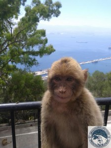 Gibraltar-Rock-Ape-Tours-918