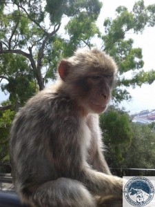 Gibraltar-Rock-Ape-Tours-931