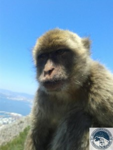 Gibraltar-Rock-Ape-Tours-952