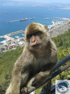Gibraltar-Rock-Ape-Tours-956